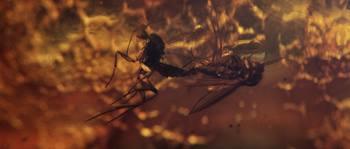 Pierre Huyghe, De-extinction, , Film, 19 min, 2014